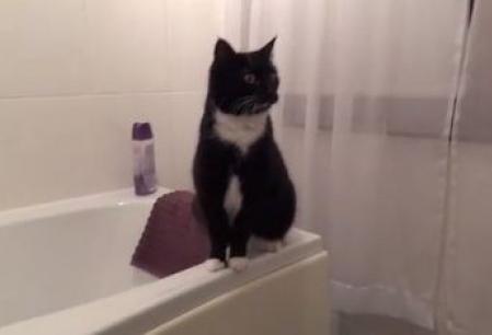 Reactia neasteptata a unei pisici atunci cand se vede in oglinda
