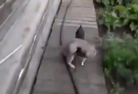 Un catel aduce pisica in casa