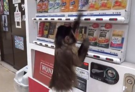 O maimuta isi ia singura de baut