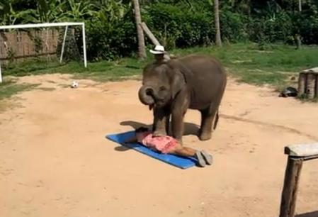 Elefantul maseur